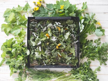 The view from the top. Medicinal herbs on a white wooden table. Black grate with dried herbs surrounded by fresh herbs. Spring preparations of medicinal herbs for the future.