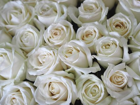 Congratulations to the holiday. A large bouquet of white roses on a gray background in paper packaging. Place for text.