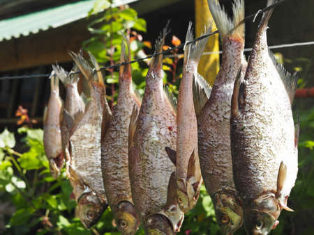 The result of summer fishing. Fresh bream caught in the river is dried in the sun.