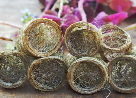 Floriculture. Seedling roots of a red kelius plant, ready for planting. Banque d'images