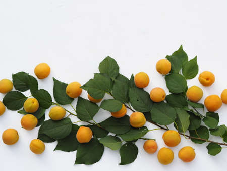 Fruit background.Fresh apricots with dots are laid out on a white background. 免版税图像