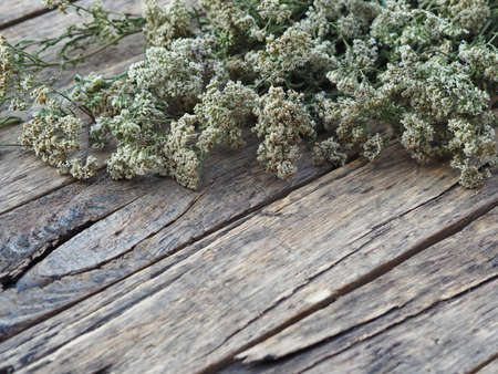Place for text.Bunches of medicinal yarrow with white flowers are laid out and dried naturally on a wooden background.