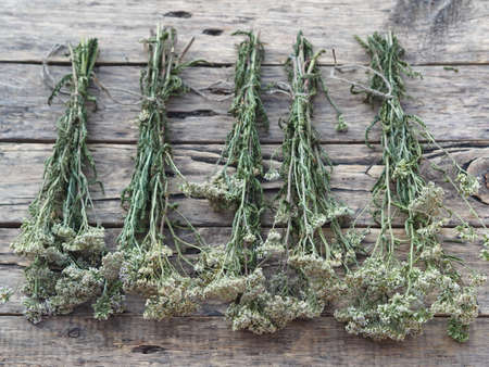 The season for harvesting medicinal herbs.Bunches of medicinal herbs are laid out and dried naturally on a wooden background.