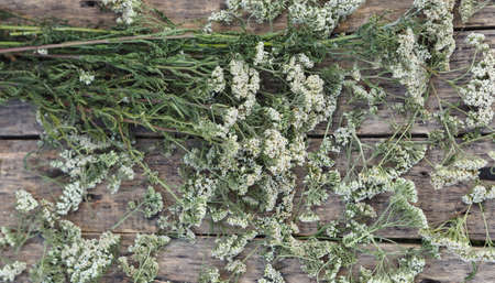 Closeup of flower achillea millefolium, commonly known as yarrow or common yarrow on rustic weathered wooden boards. Medicinal plant.Empty space for your text. 免版税图像