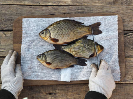 Freshly caught golden carp on a kitchen cutting board is ready to be scaled. Russian river fish. Stock Photo