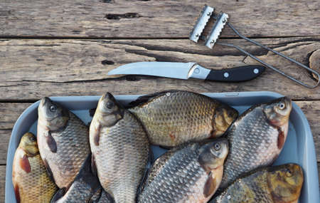 Fresh golden carp in a kitchen bowl ready to be scaled. Russian river fish on a wooden background.