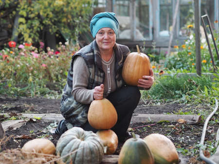Autumn agricultural work. An elderly woman has grown pumpkins in her garden and enjoys the harvest. Harvesting pumpkins for the winter for future use.