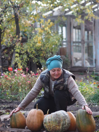An elderly woman has grown pumpkins in her garden and is enjoying the harvest. Autumn agricultural work. Harvesting pumpkins for the winter for future use.