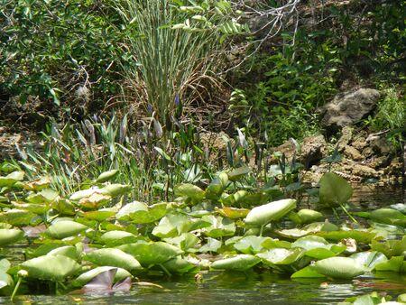 everglades: Everglades landscape