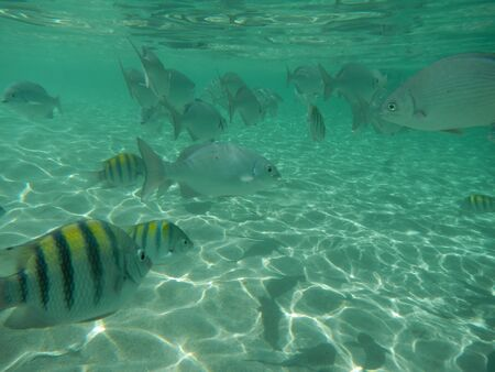 Tropical fish in Roatan Фото со стока