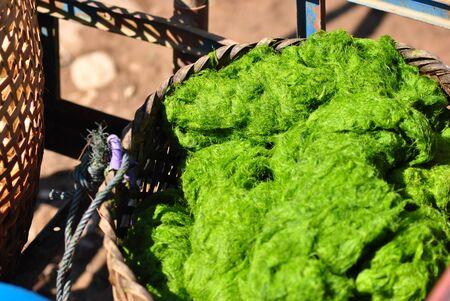 algas marinas: algas en la cesta