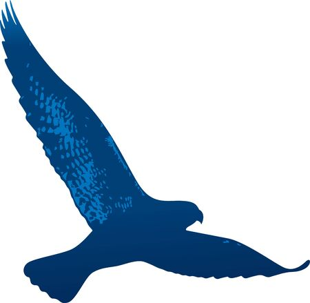 Vector illustration. Isolated flying hawk drawed in blue tones.  イラスト・ベクター素材