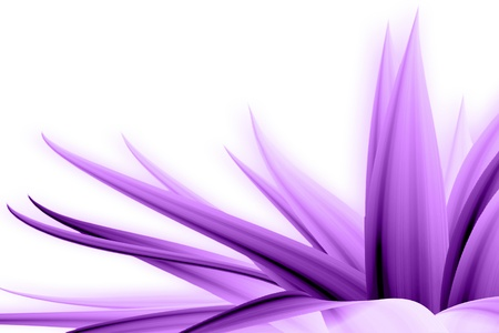 flor morada: direcci�n de flor Foto de archivo