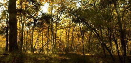 natural vegetation: forest