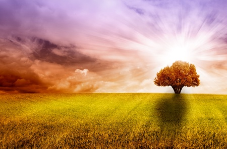 tierra: árbol aislado