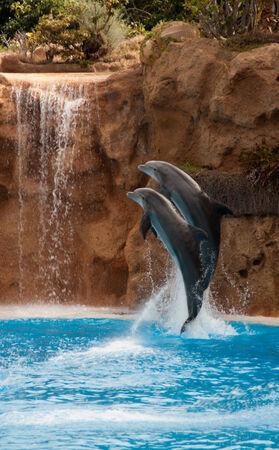 cetaceans: dolphins Stock Photo