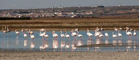 Flamingos in complex Lagunar Manjavacas, Spain Stock Photo
