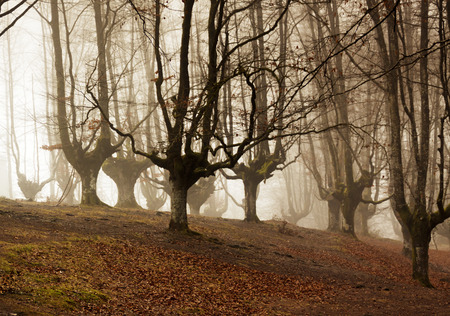 colorful autumn at otzarreta forest in gorbea natural park, basque country. Spain Stock Photo