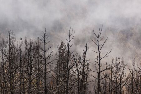 Forest fire during the summer in the Sierra de Guadarrama national park, between Madrid and Segovia. Spain. Desolate landscape where green ferns sprout.