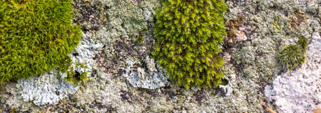 Stone background with moss and lichens. Natural rock texture with detail, macro photography graphic resource Reklamní fotografie