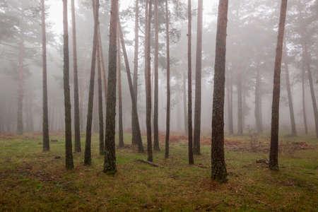 Autumn scene with fog in the Sierra de Guadarrama national park. In Segovia and Madrid, Castilla y León