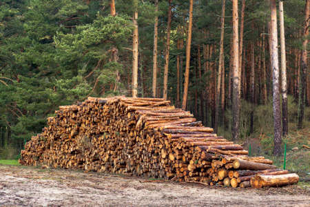 Logging, deforestation of the planet. stacked logs. Background of stacked pieces. Pino de Valsain in Segovia, Castilla y Leon.