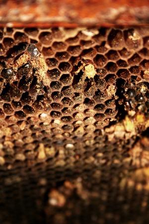 Macro shot of honeycombs. Stock fotó