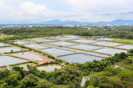 camaron: El cultivo de camar�n en Tailandia
