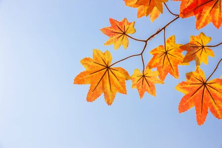 Autumn maple leaves background blue sky
