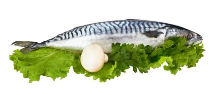 mackerel fish isolated on white background  photo