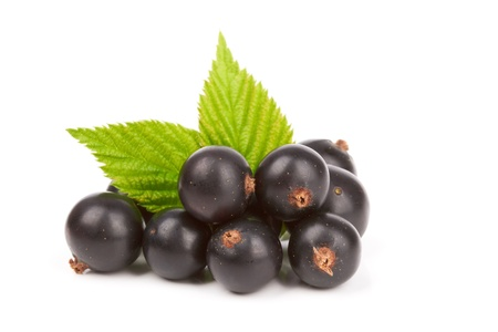 Berries of a black currant with leaf on a white background