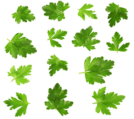 Parsley leaves collection isolated on white background