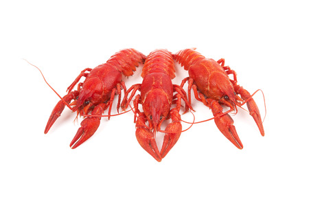 shell fish: three boiled crayfish on a white background Stock Photo