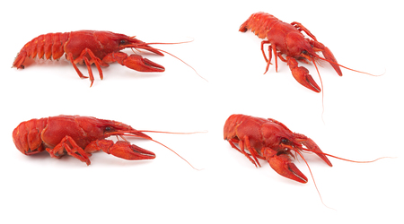 cancers: Boiled crayfish isolated on a white background Stock Photo