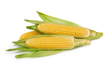 Verduras de maíz fresco con hojas verdes sobre blanco