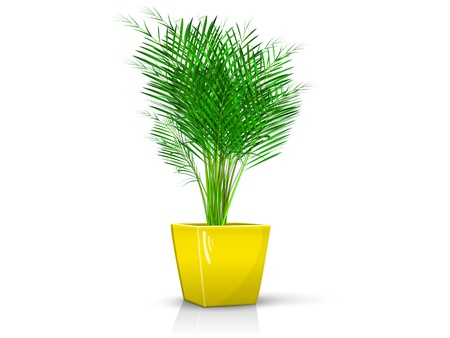 palm in glossy yellow pot, realistic, volume with the reflection of the Illustration