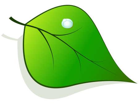 feuille verte avec des gouttes de ros�e