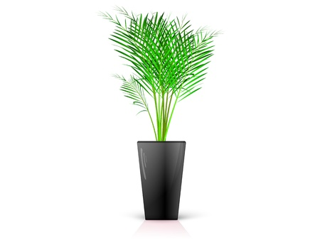 Palm in glossy black pot, realistic, volume with the reflection of the Stock Vector - 19910307