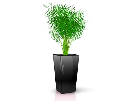 Palm in glossy black pot, realistic, volume with the reflection of the