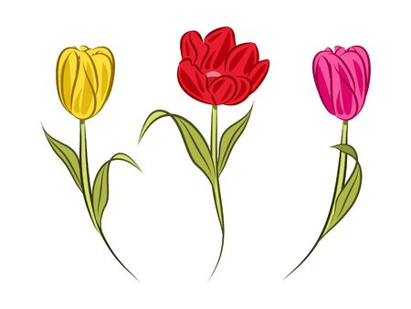 spring red yellow and pink tulips on white background