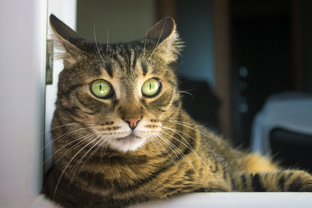 scared tabby cat, leaning out of the window