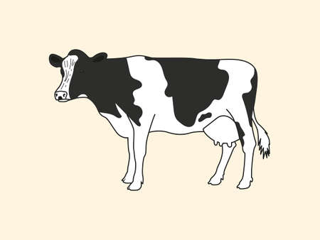 Realistic drawn cow on a light background