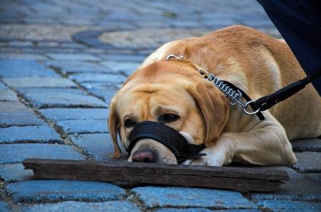 trustful: Human best friend - dog resting
