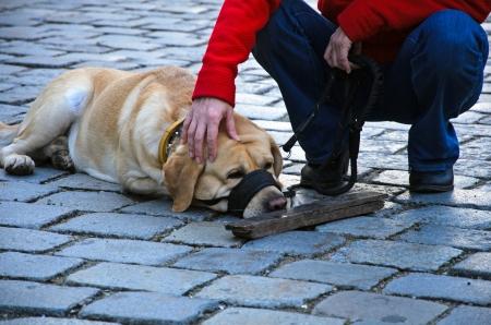 Photo of dog lying on the ground Stock Photo - 17036945
