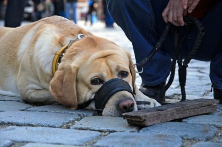 trustful: Photo of dog lying on the ground