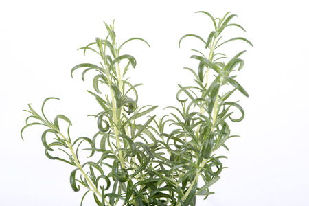 twing: image herb rosemary on white background