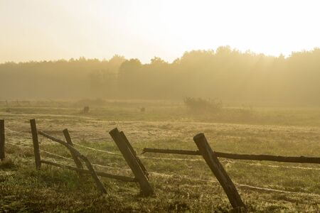color silence: photo of the morning on a meadow Podlasie Stock Photo