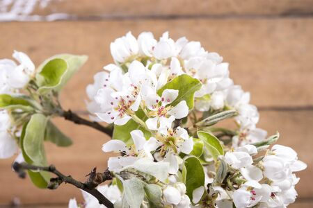 photo of white blooming flowers on the fruit tree