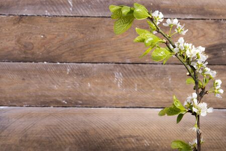 photo of the wooden background with white flowers blooming Stock Photo