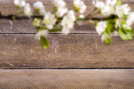 twing: photo of the wooden background with white flowers blooming Stock Photo